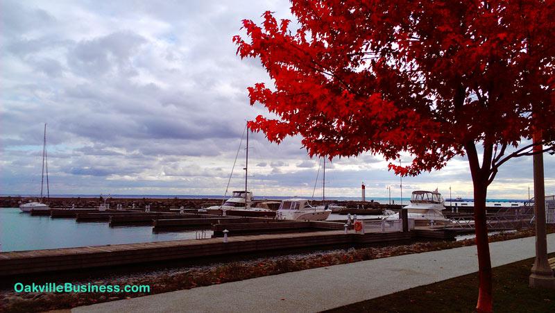 fall-oakville-lakeshore-ob